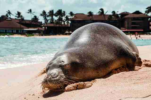 Kauai Sea Lion Best Things to Do Most Beautiful Places