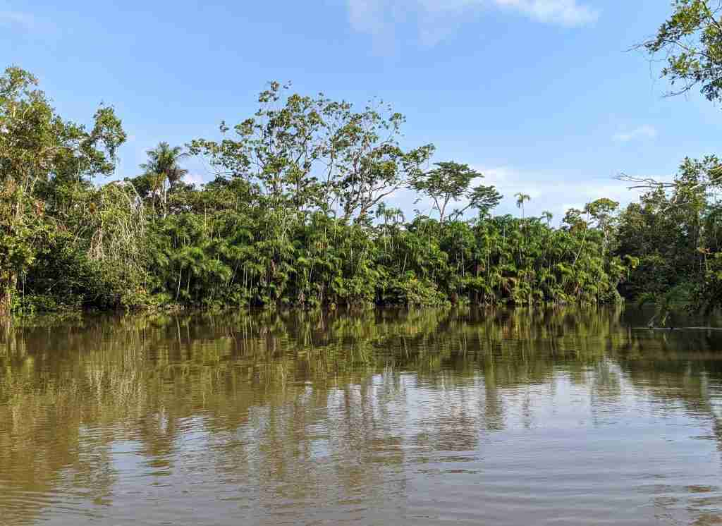 Mangroves Ecuador Best Things to Do from Guayaquil