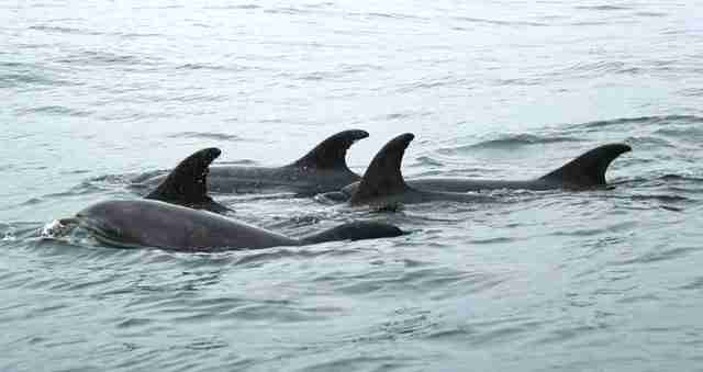Day trip from Guayaquil to spot dolphins