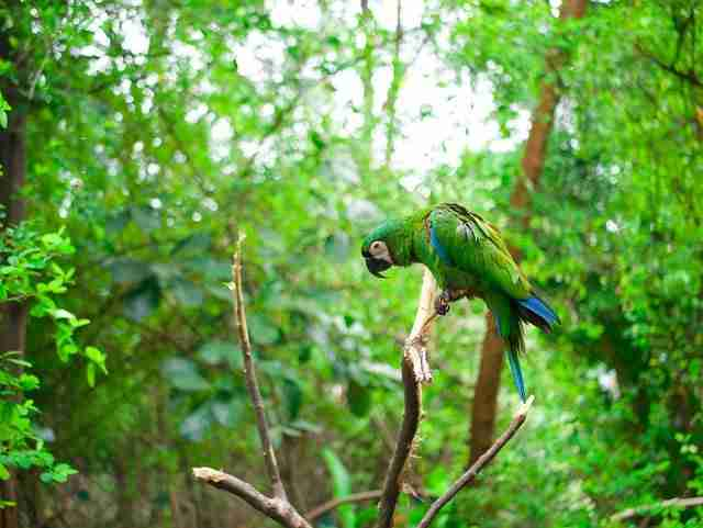 Green Macaw Ecuador Best Day Trips from Guayaquil