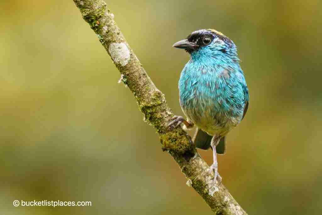 Birding in Mindo Valley