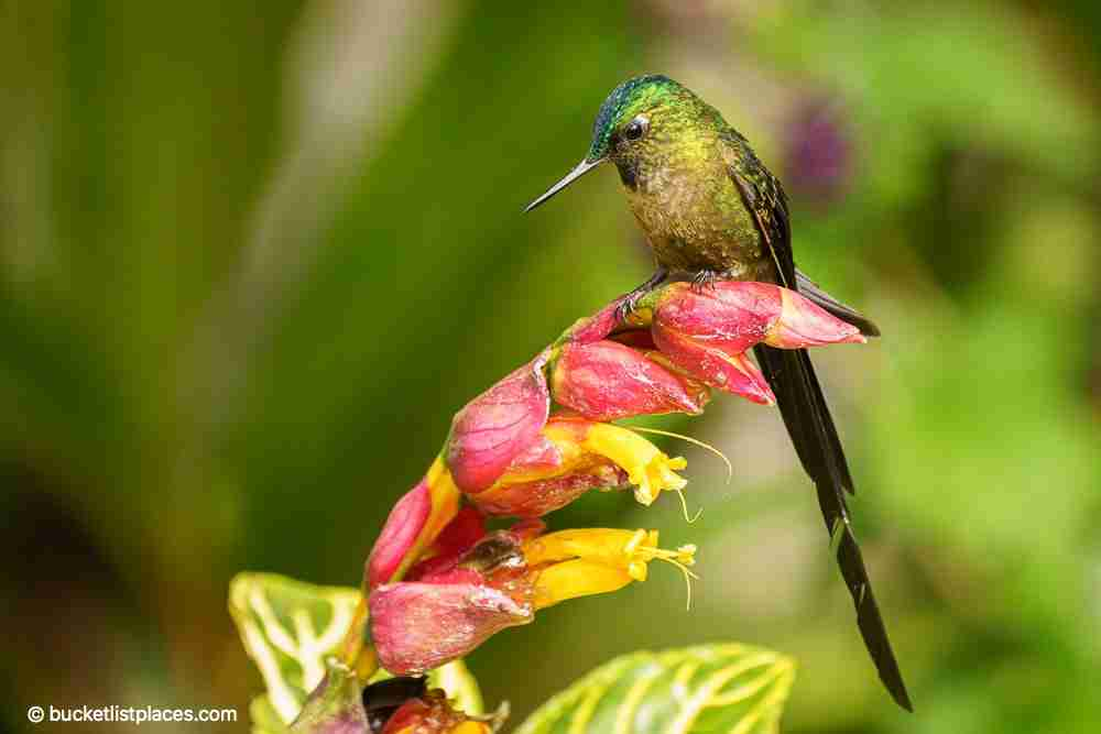 Hummingbird Mindo Best Day Trips from Quito