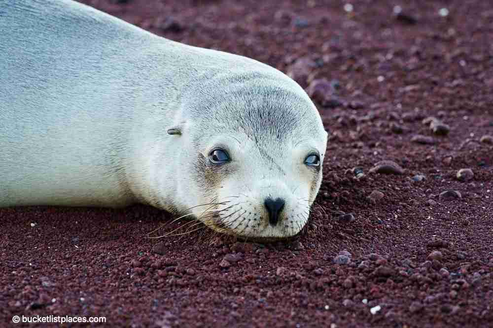 Most Beautiful Places in Ecuador Galapagos Weekend Trip from Quito